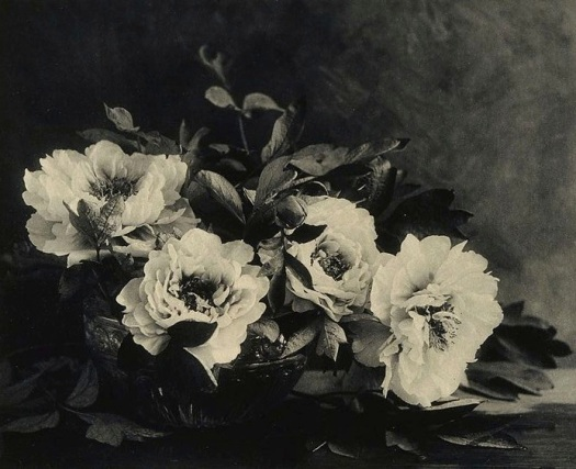 peonies-by-e-louise-marillier-1912
